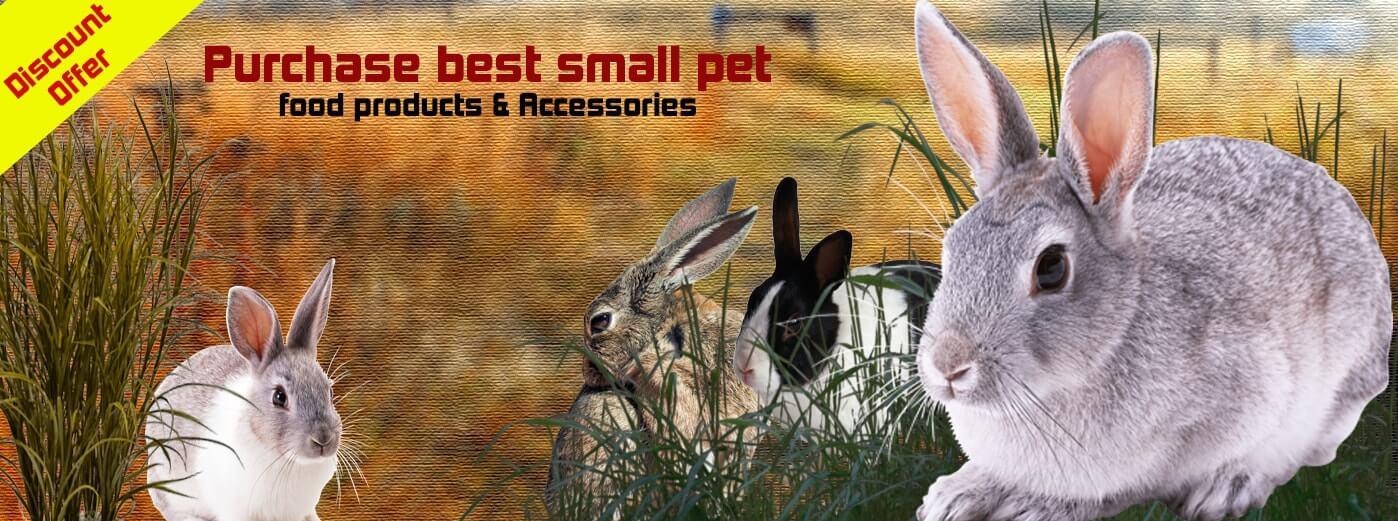 small_pet_slide.jpg
