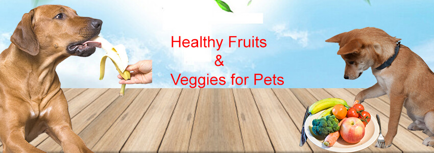 Why is Important to Provide Healthy Fruits and Vegetables to Your Dogs