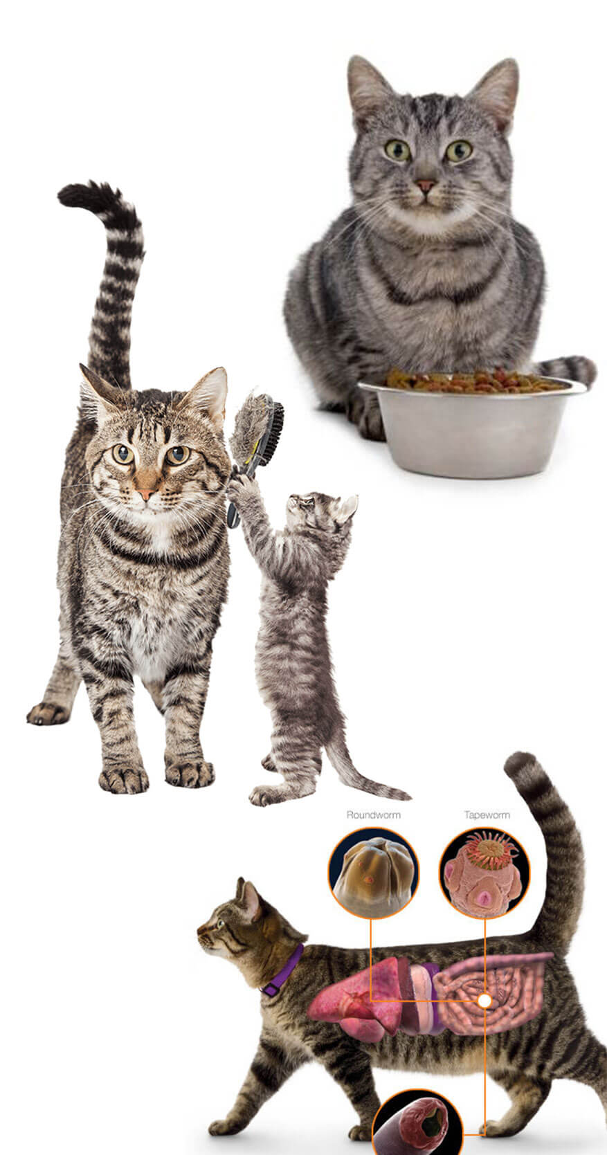 Advantages and Disadvantages of Dry Food for Cats