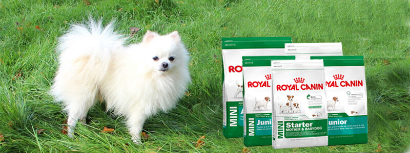 Good Pomeranian Canine Adorable Dog - Pomeranian_dog_food_online  Picture_32562  .jpg