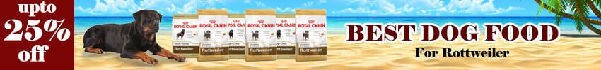 How to Feed Royal Canin Dry Dog Food to Rottweiler Dogs?