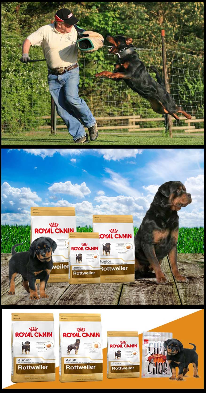Best Royal Canin Products Fit For Proper Pup's Health Growth
