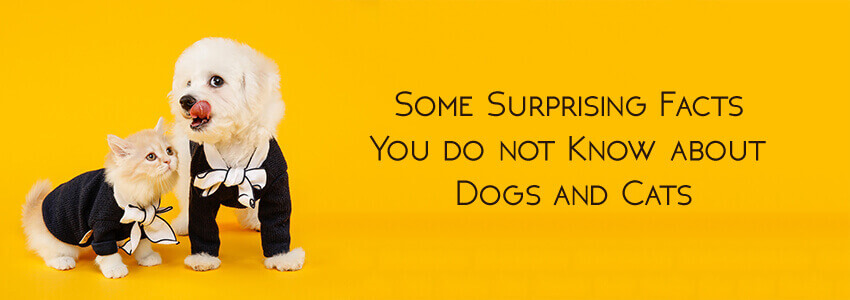 Some Surprising Facts You do not Know about Dogs and Cat.