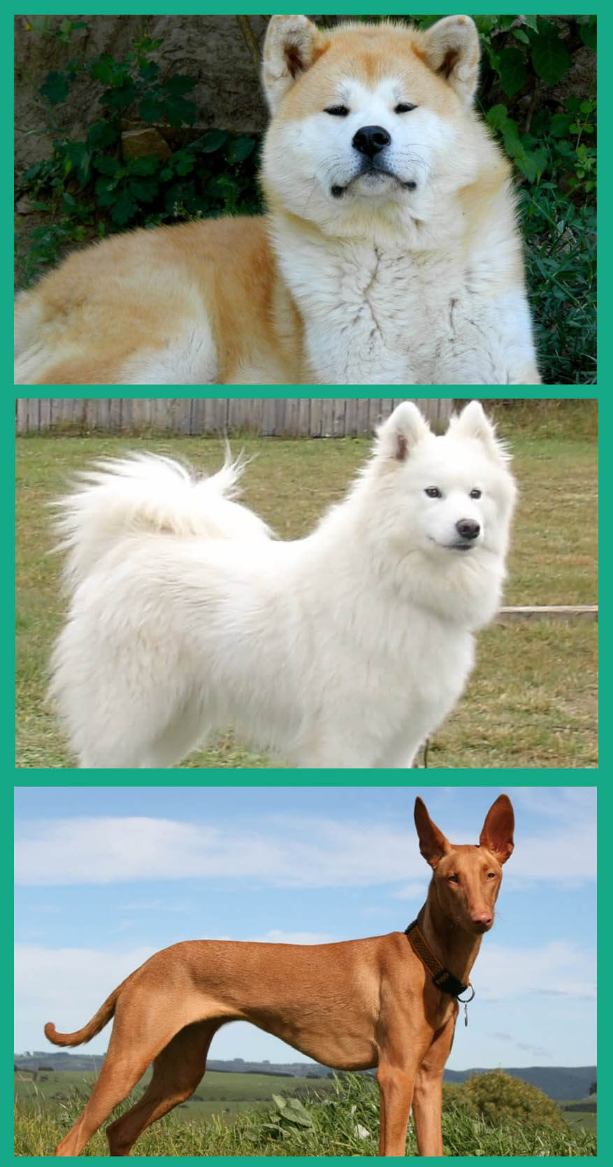 Top Ten Most Expensive Dog Breeds information for canine lovers