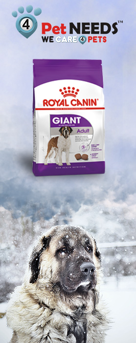 Why Your Senior Dog Needs Special Concern in Winters?