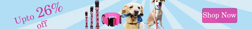 Make Your Dog Master In Off Leash Walking With These Simple Steps