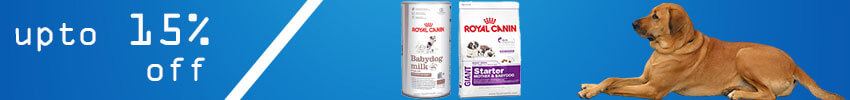 What to Feed a Pregnant Dog to Make the Breeding Exciting and Gratifying