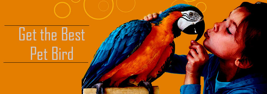 Know which is the best bird to keep as a pet