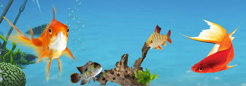 Which is the best fish to have as a Pet