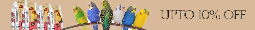Amazing Tips on Protecting Your Pet Bird in the Summer Season