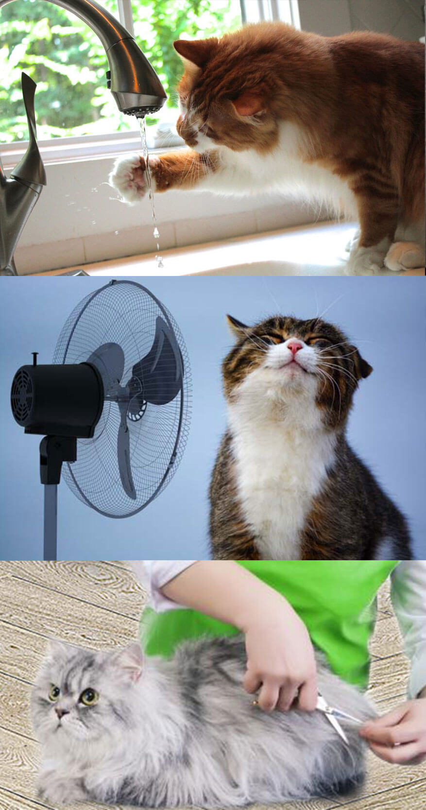 How to Provide Your Cat with the best Care in the summer
