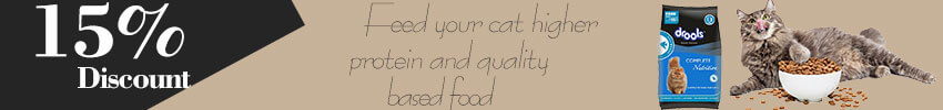 Some Effective and Result Oriented Ways to Help Your Overweight Cat to Lose Weight