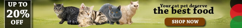 Comparative Description Regarding on Cat Breeds