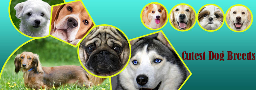 A List of Ten Cutest Dog Breeds in the world for Canine Lovers