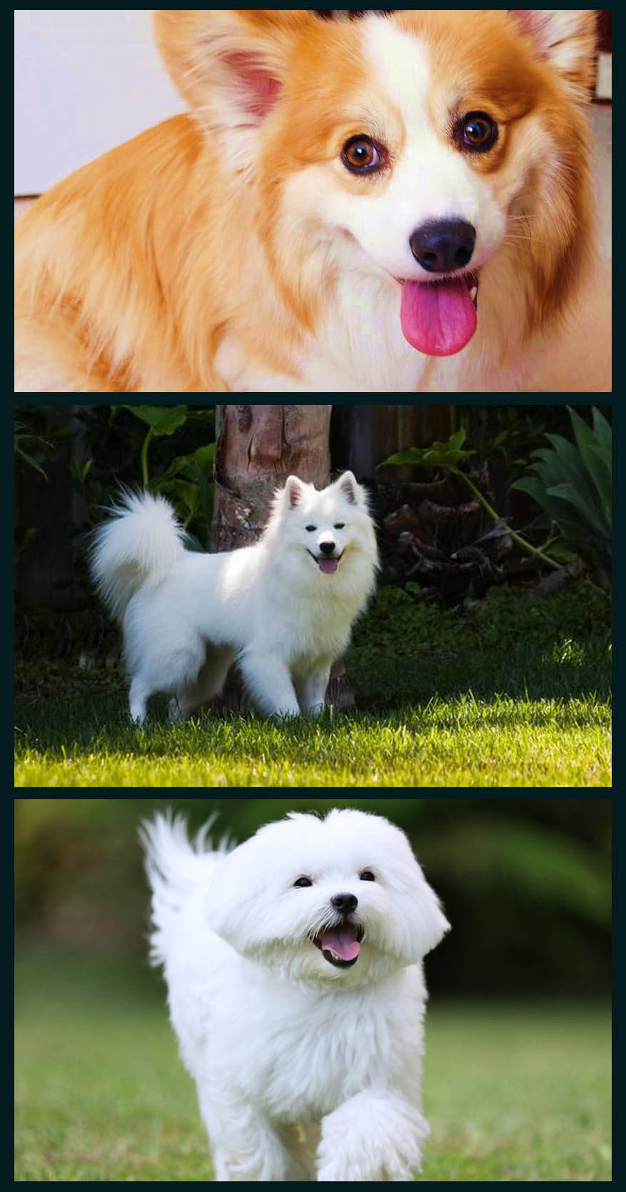 Must see Pomeranian Canine Adorable Dog - cutest_dog_online  Pictures_358568  .jpg