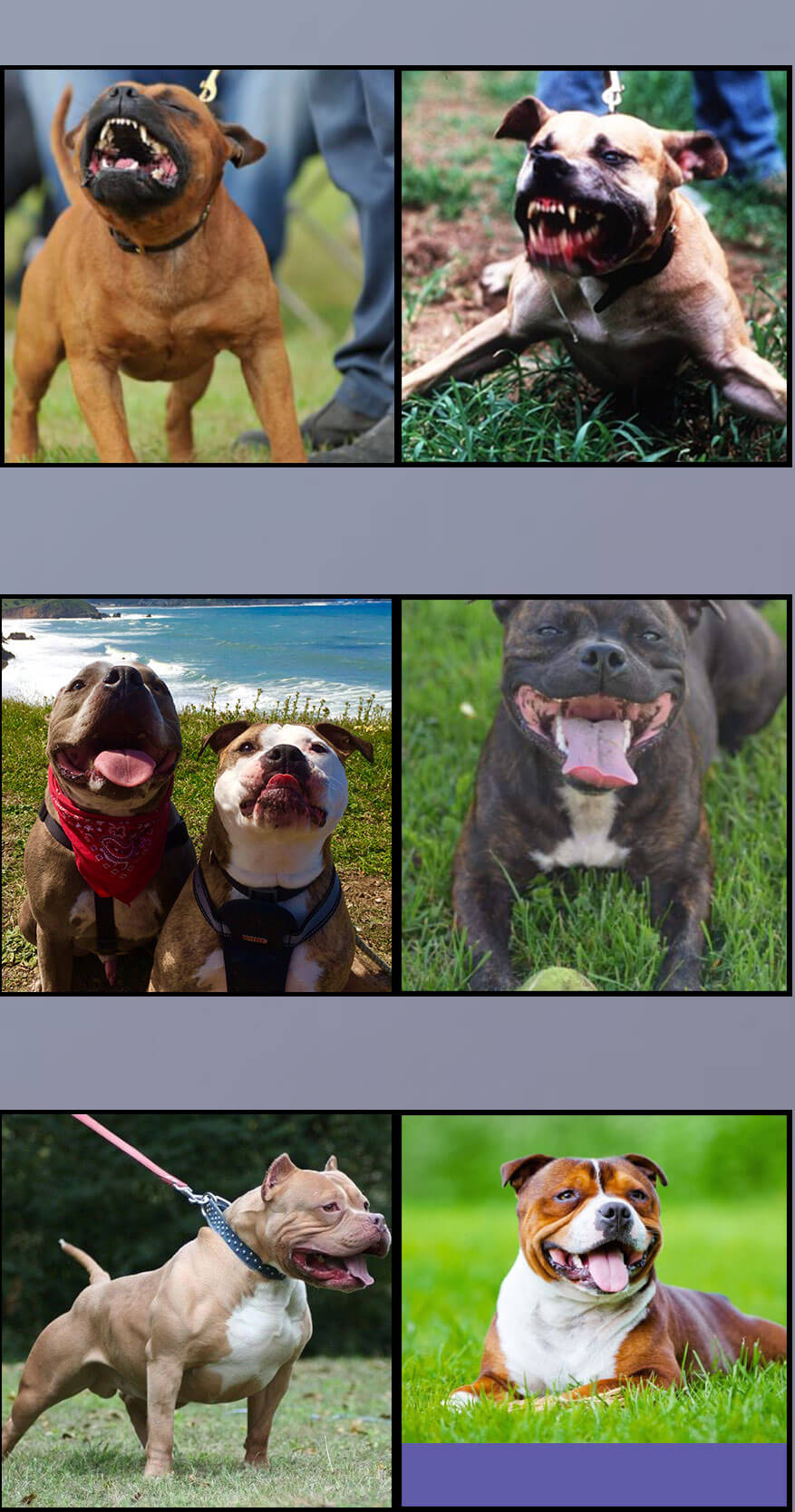 Important Facts that Proved that Pit Bulls are Dangerous or not