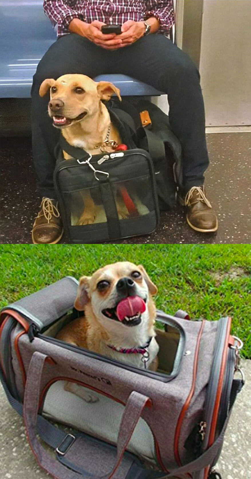 How to Travel with Your Dog in Train with Lot of Fun?