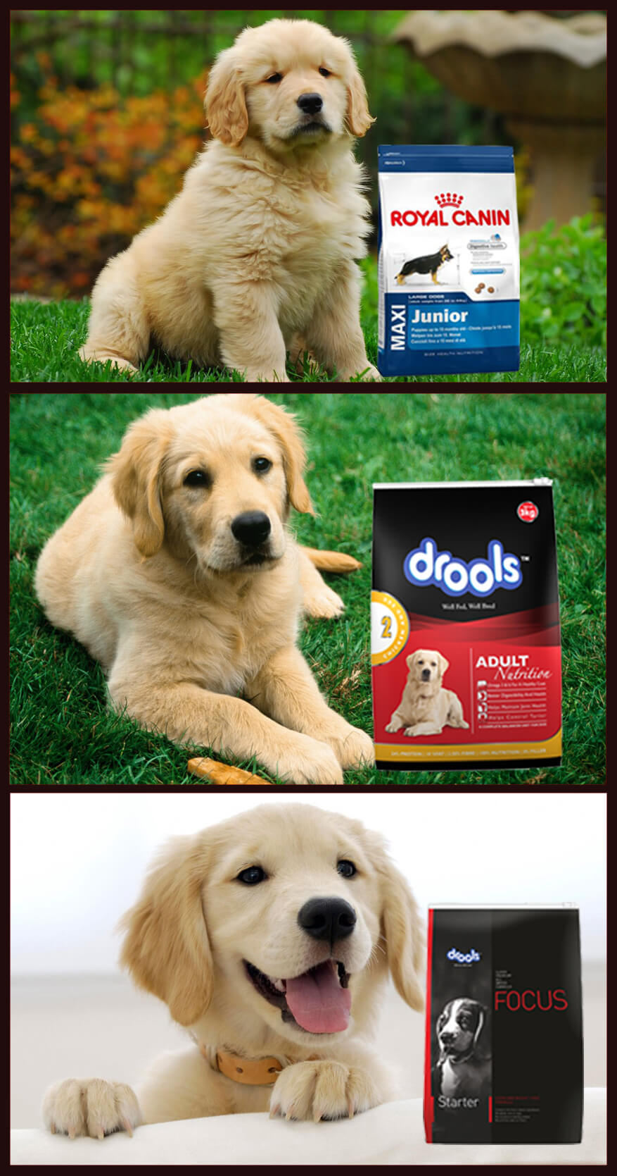 Top 10 Dog Food Brands in India which are easily available online