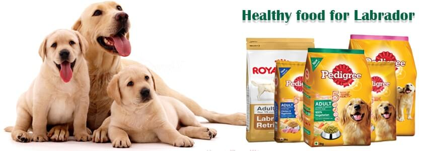 Nourish your Labrador puppy with the best food for its ideal health
