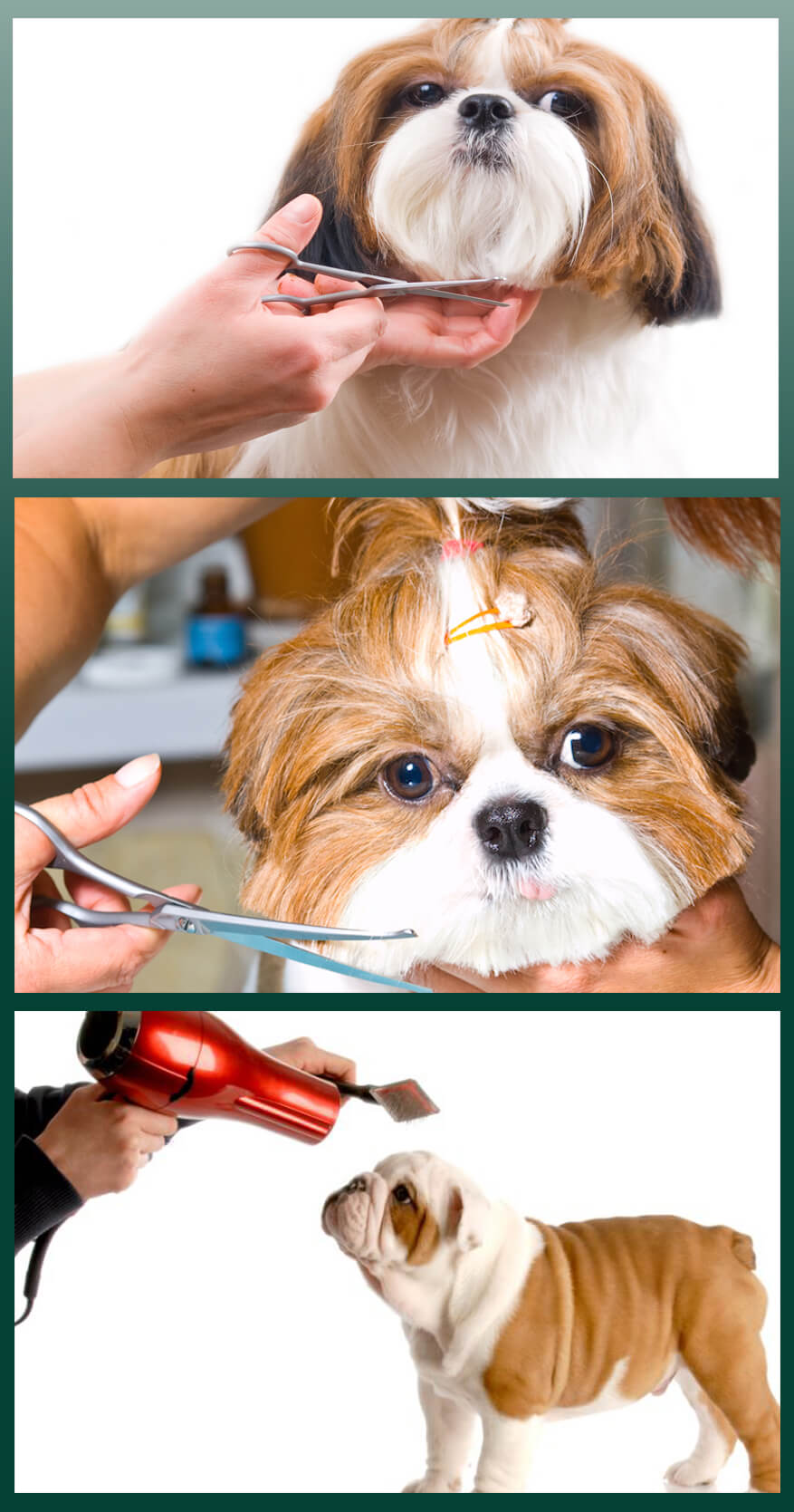 Use the premium Dog grooming kit to enhance your dog's cuteness