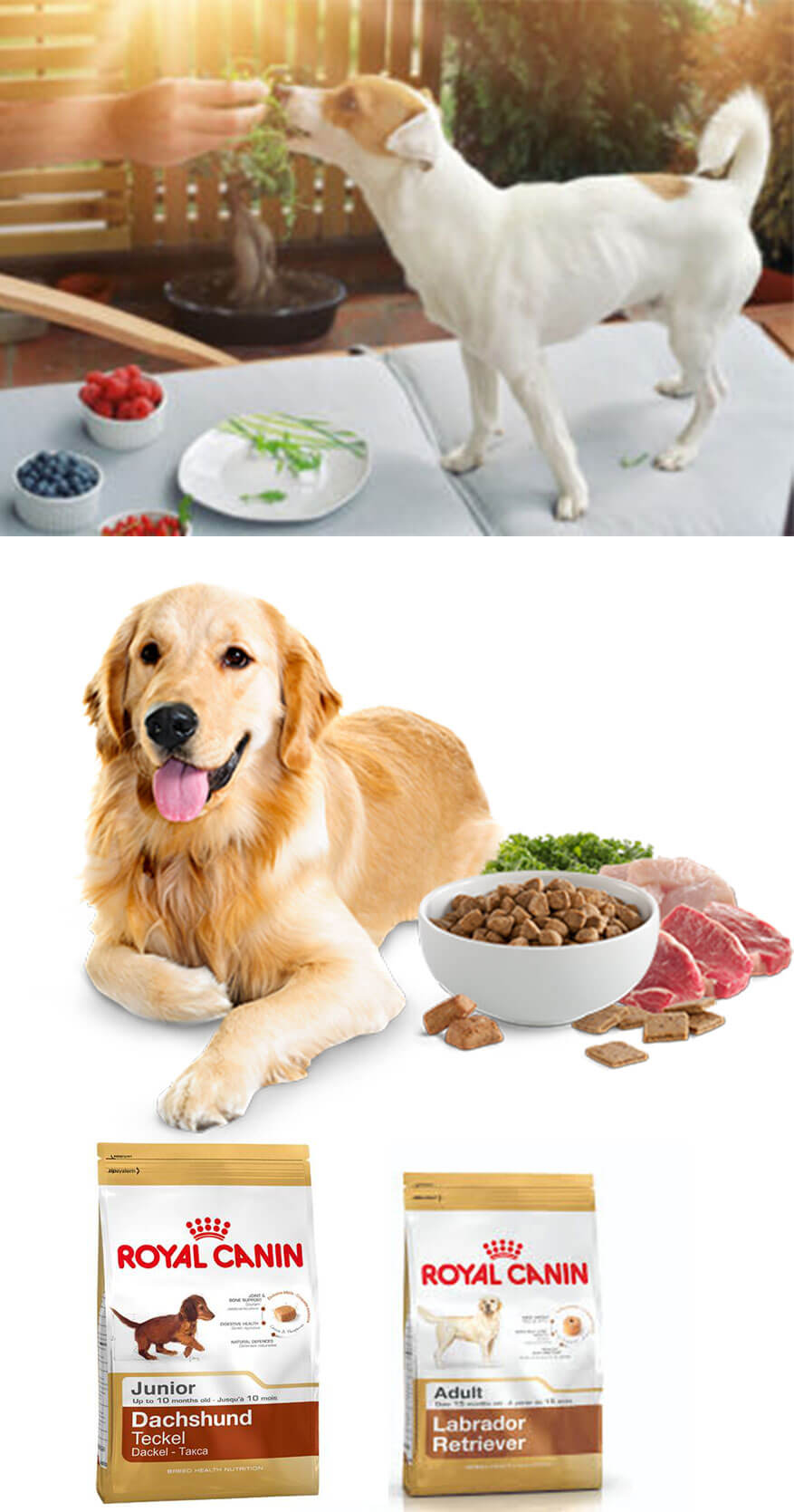 5 Tips to Keep Your Dog Healthy and Happy
