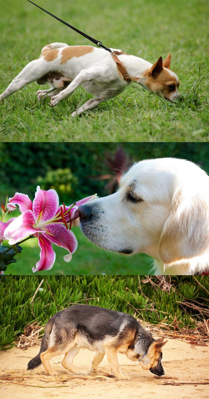 Know how much better a dog sense of smell is than Human