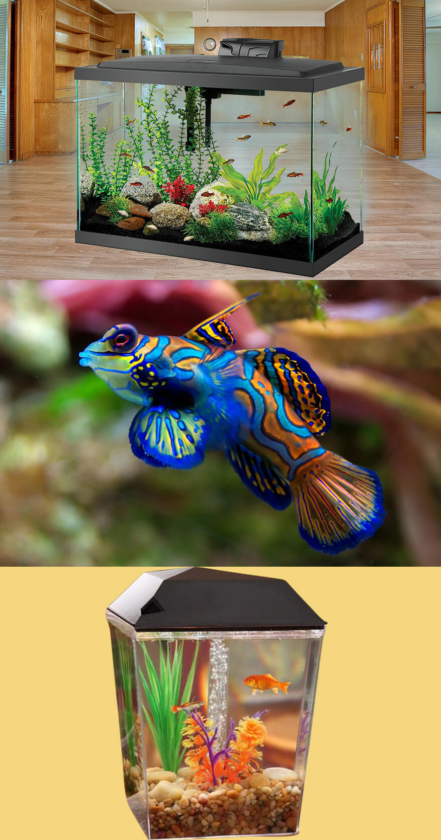 How to Keep Fish Tank Cool in summer?