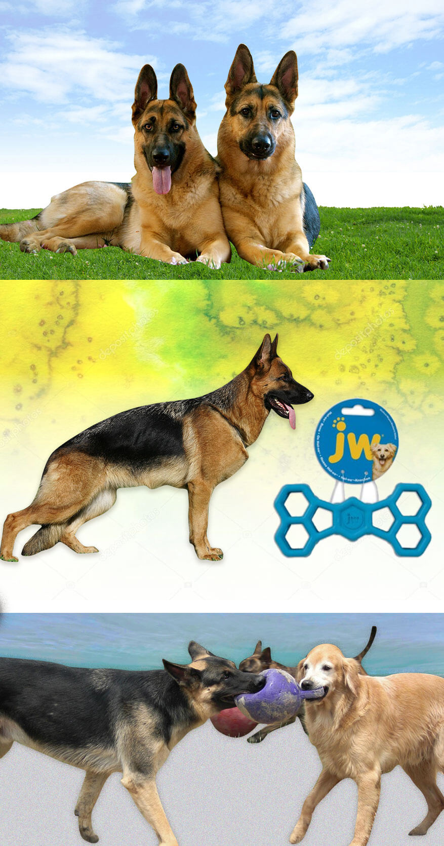 German Shepherd Temperament useful information for dog lovers