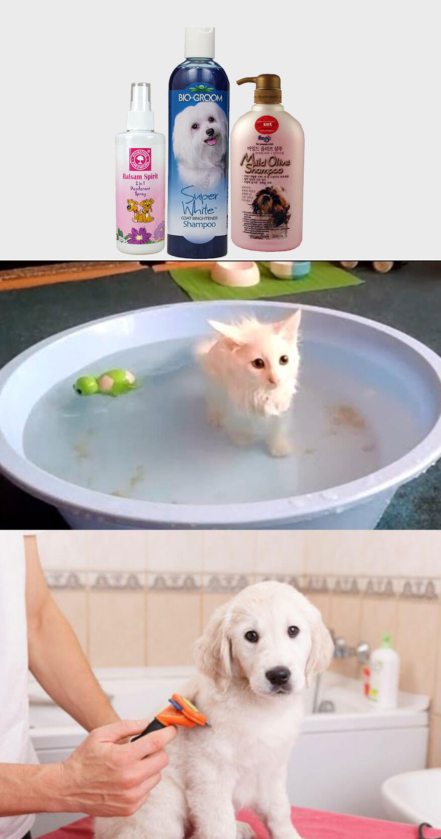 How to Protect Your Pet from the Summer Heat