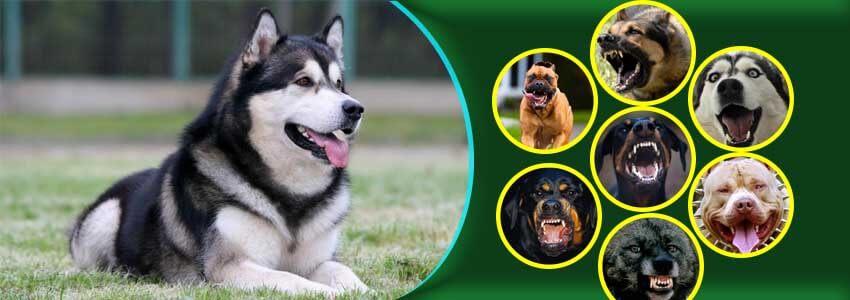 Ten most intelligent dog breeds information for all dog lovers