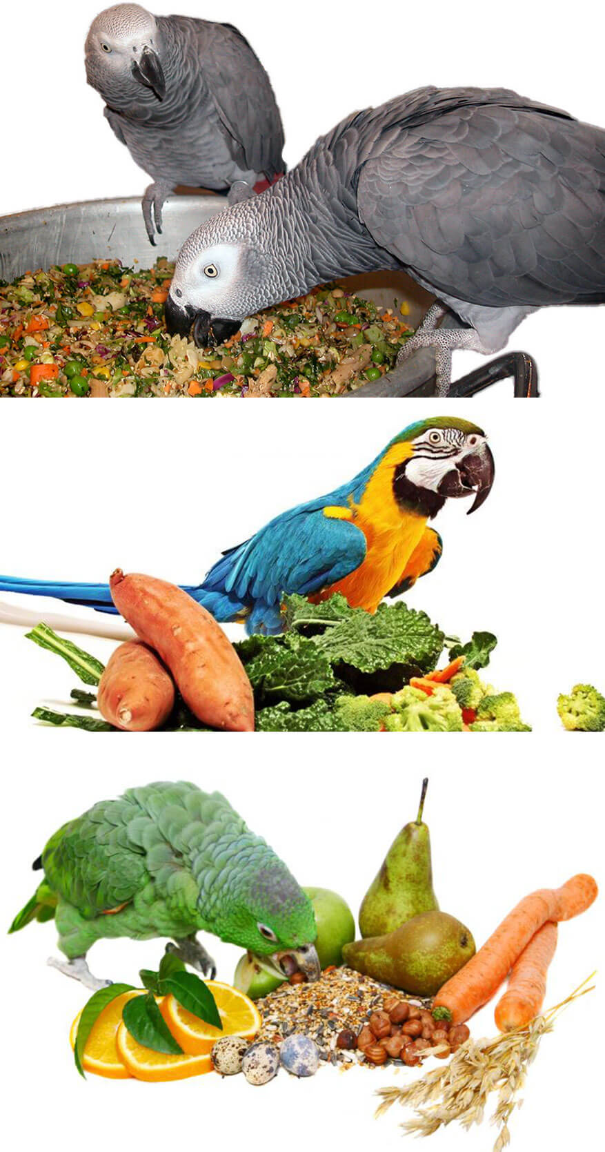 Which is the best Food for a Parrot?