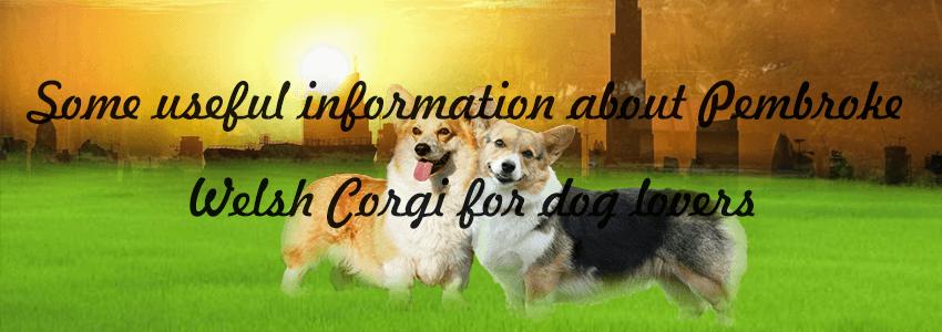 Pembroke Welsh Corgi Dog Breed Information, Facts and Pictures - 4Petneeds