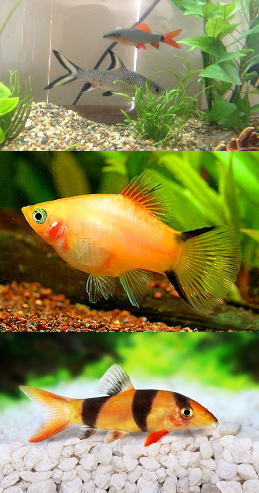Which is the best fish to have as a Pet?