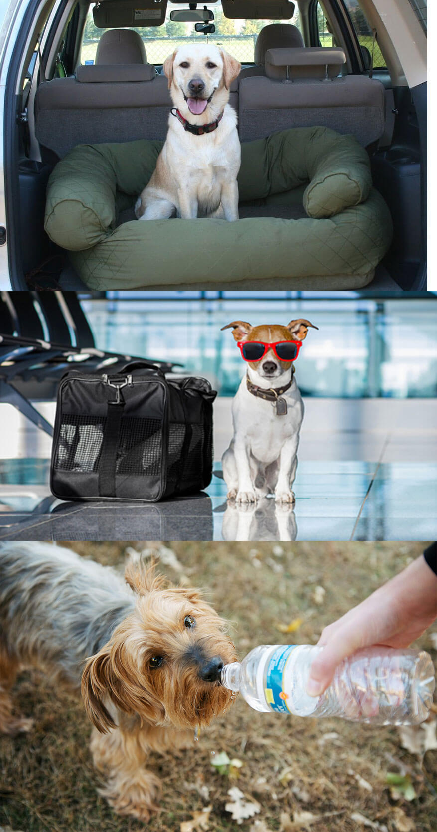 Consider these Important Rules While Traveling with Your Pet