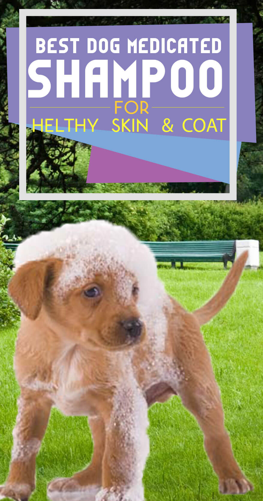 Improve Your Dog Skin & Coat with This One Simple Hack