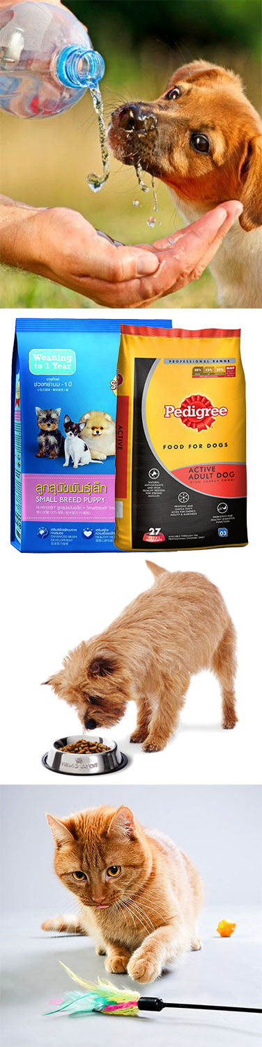 Best Supplements for Pet to Fight Diseases and Inflammation