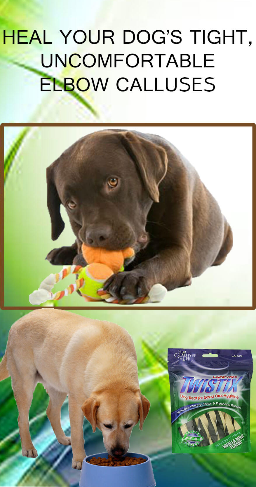 How to Heal Your Dog Tight, Uncomfortable Elbow Calluses