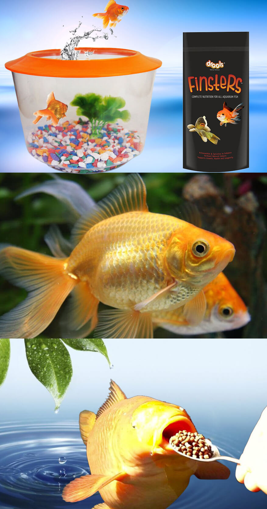 Take Care of Your Pet Fish to Make His Living Comfortable and Trouble Free