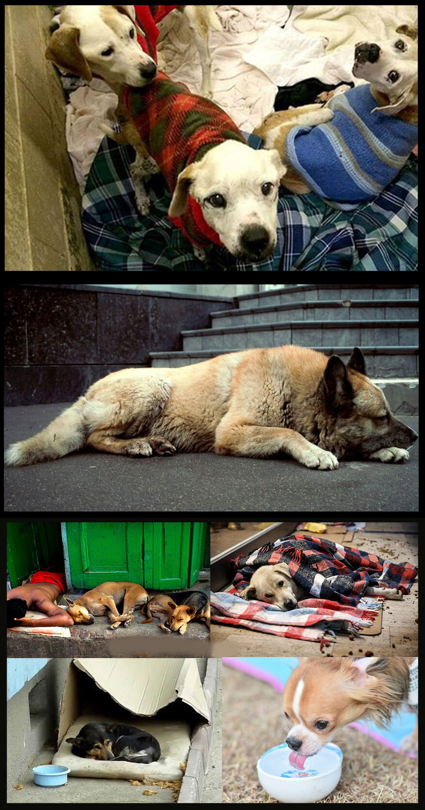 Help Homeless Dogs with the following Ways and Make Signification Effects on Their Life