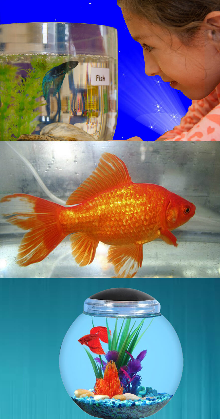 Why Fish is the Most Suitable Option as First Pet for Kids