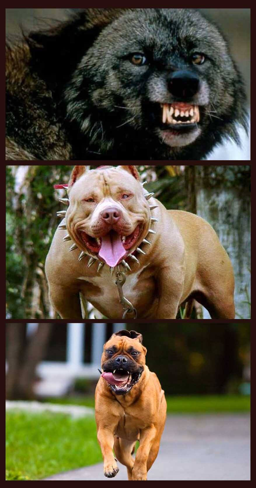 Top ten dangerous dog species that can cause severe damage by biting