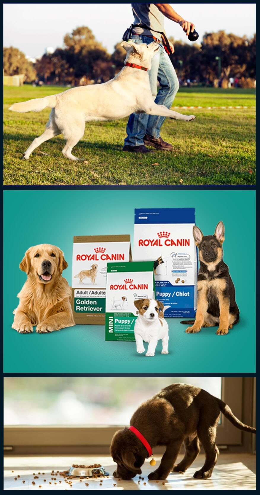 Best Dog Breeds and Their Crucial Services