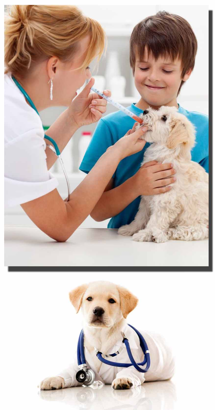 Complete Information about Pet Dog Through Head to Tail Check up