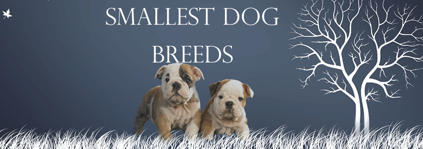 A list of ten smallest dog breeds in the world for dog lovers