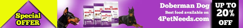 Doberman Dog Training Techniques & Detail Information
