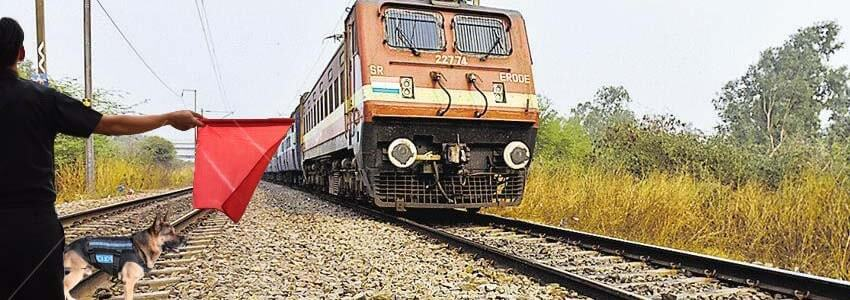 Mumbai Motorman Stopped the Train for Rescuing a Dog That Laid on Track