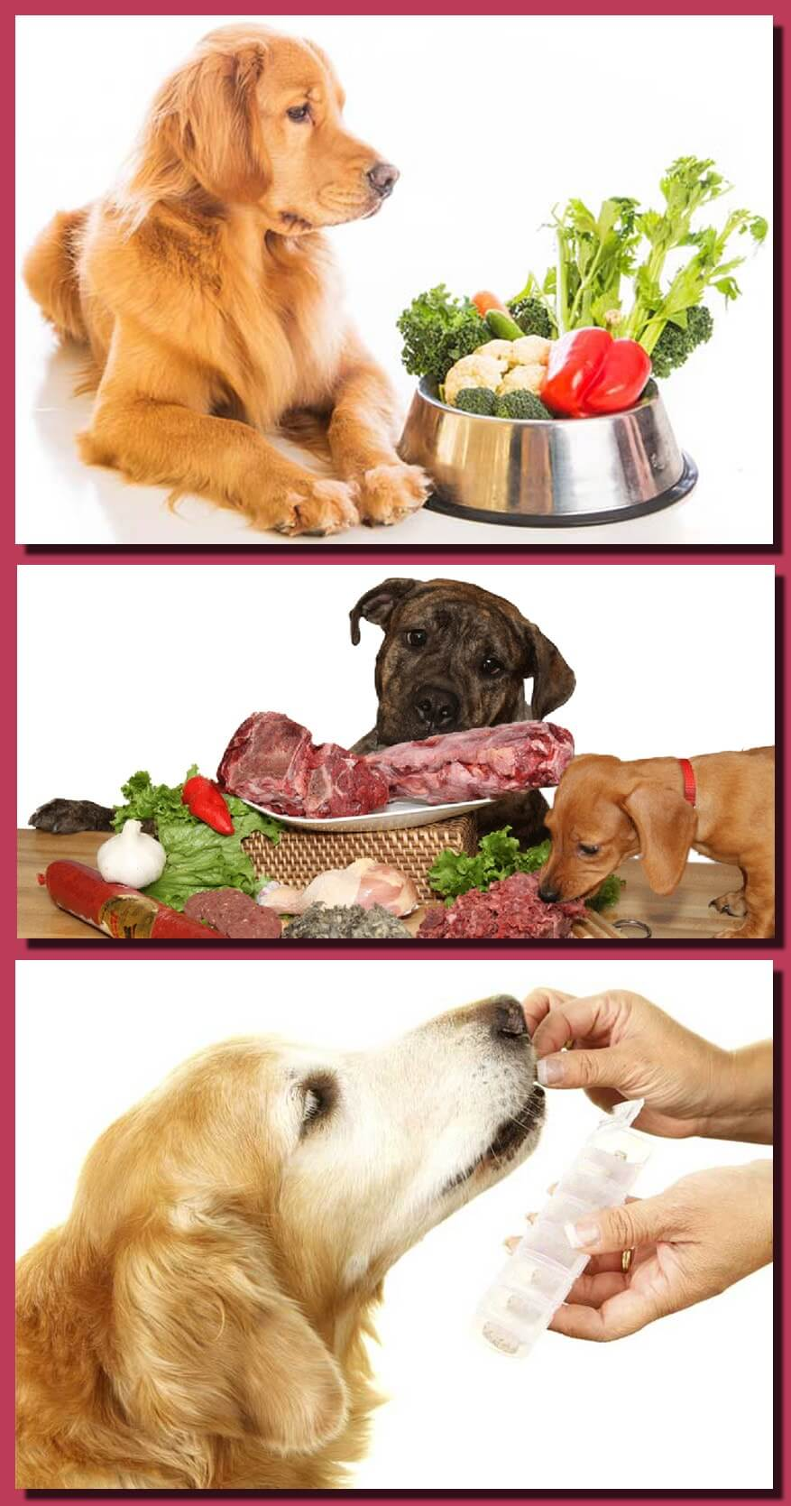 Essential Vitamins for Dogs Proper Health Growth