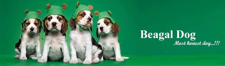 Beagle-banner