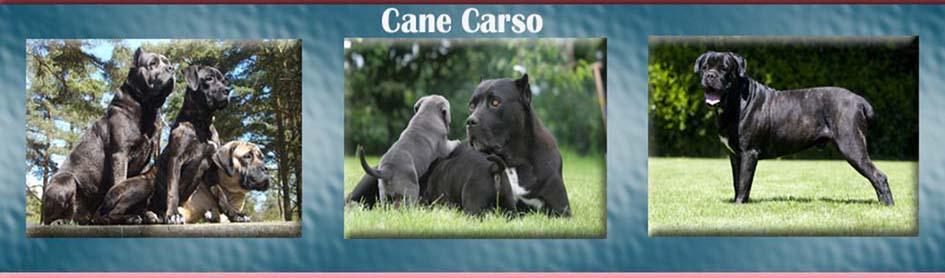 Cane-carso