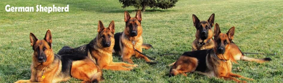 German-Shepherd-banner